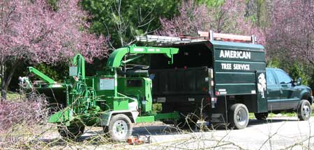 Our Baltimore Tree Care Services